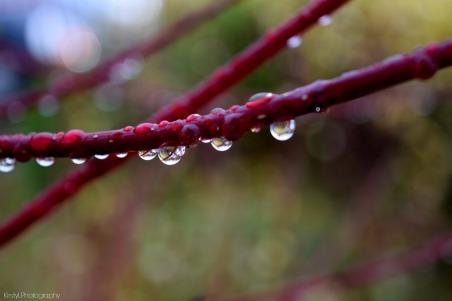 Fall raindrops.