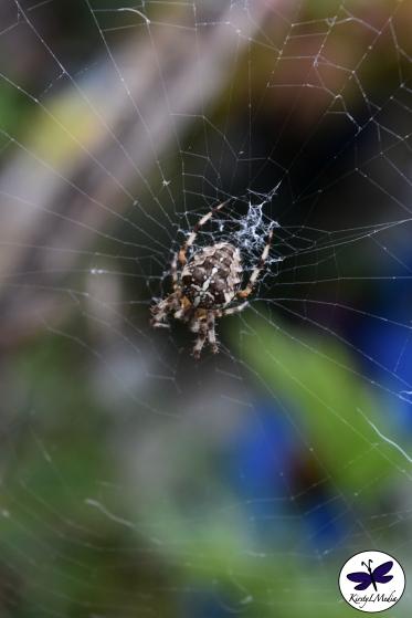Beyond the web.