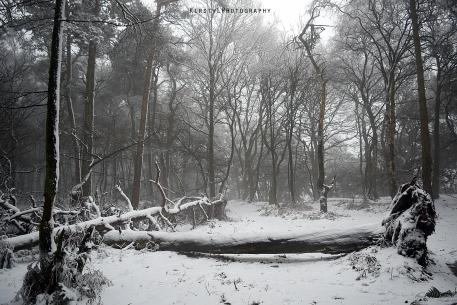 A winters walk.
